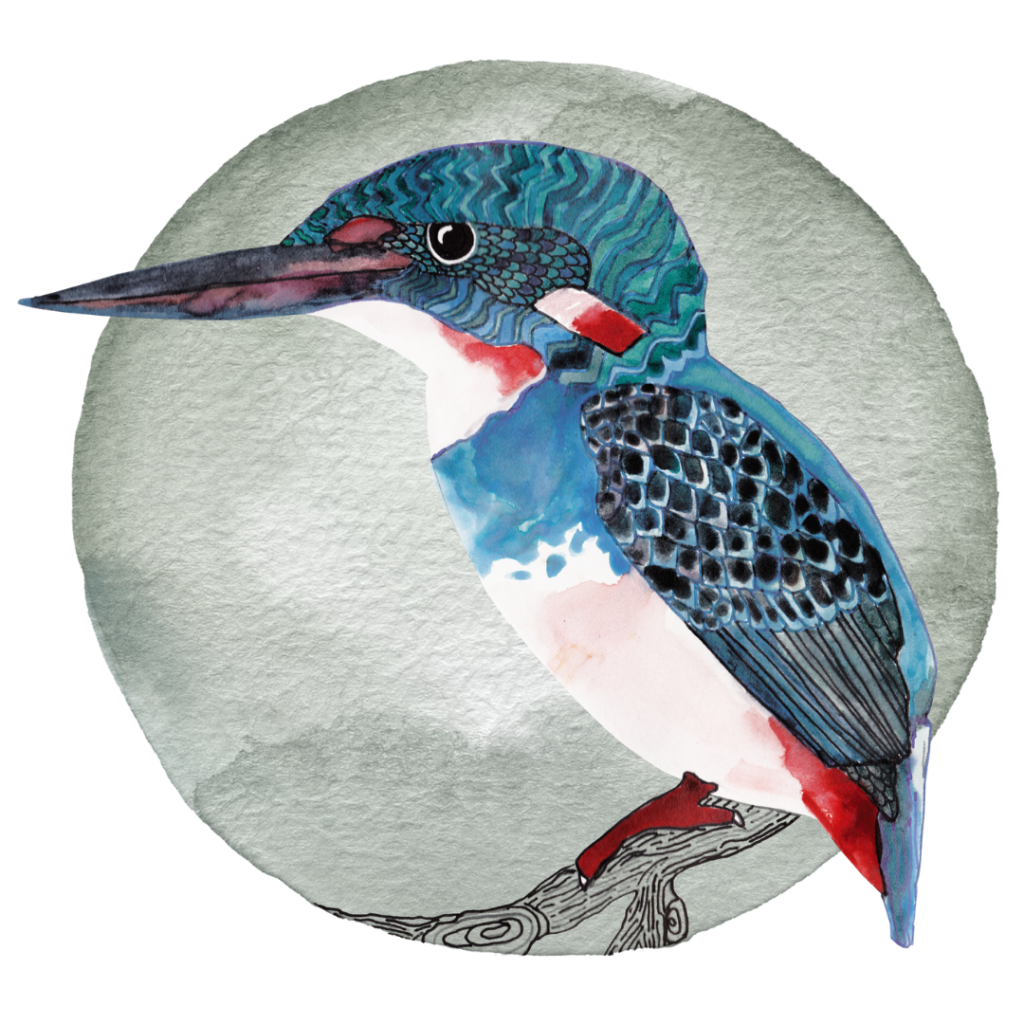 Drawing of a Javan Blue-banded kingfisher bird sitting on a branch.